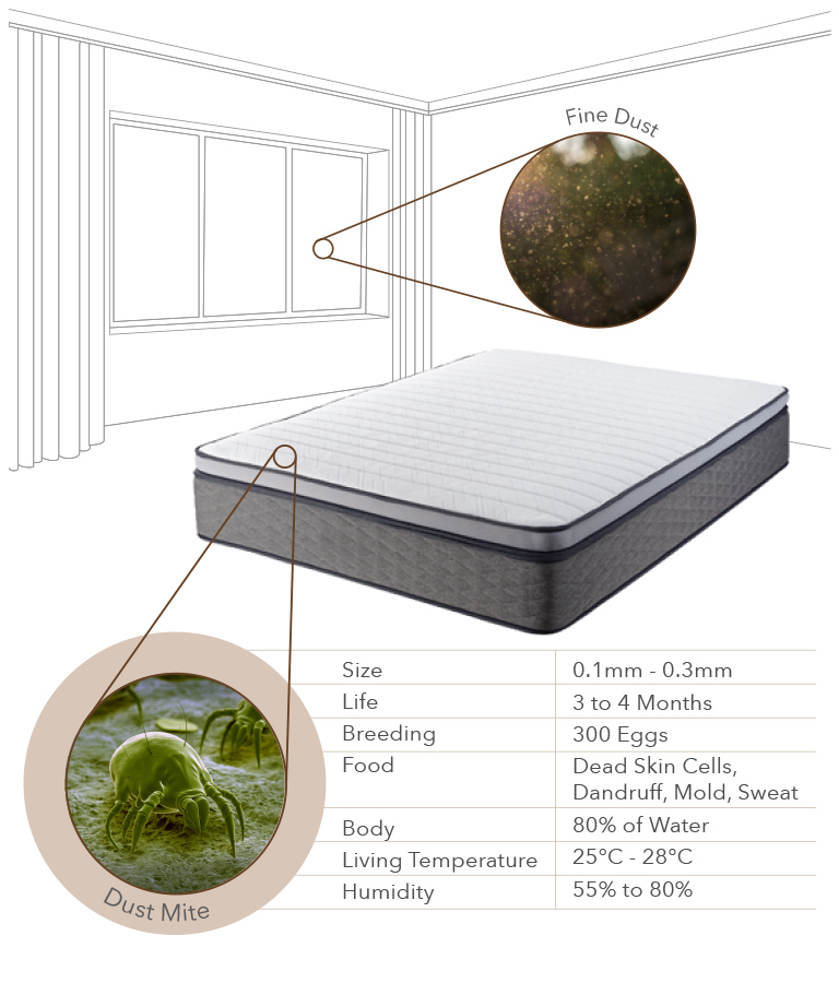 Dust Mites in Mattress - Coway Mattress Care Service Mobile Page